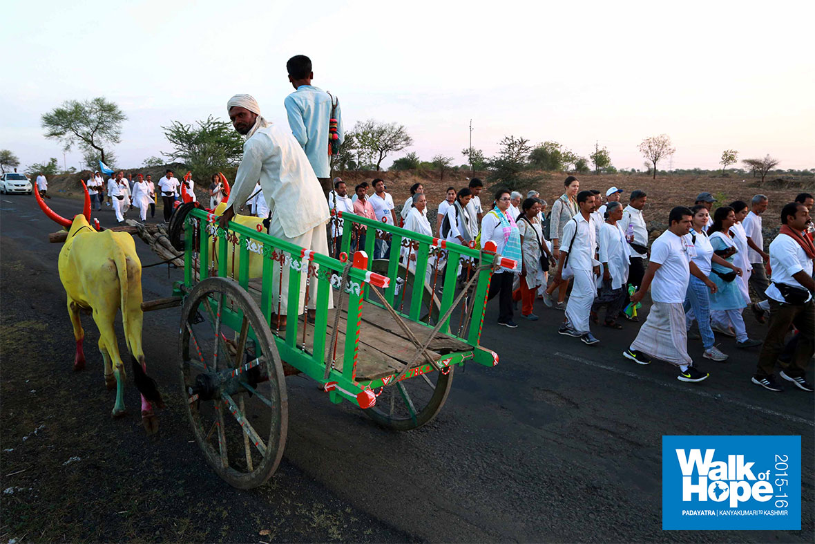 2.Turmeric-painted-oxen-and-coloured-ox-carts-are-a-common-sight-in-these-parts,-Akkalkot-Road,-Solapur,-Maharashtra