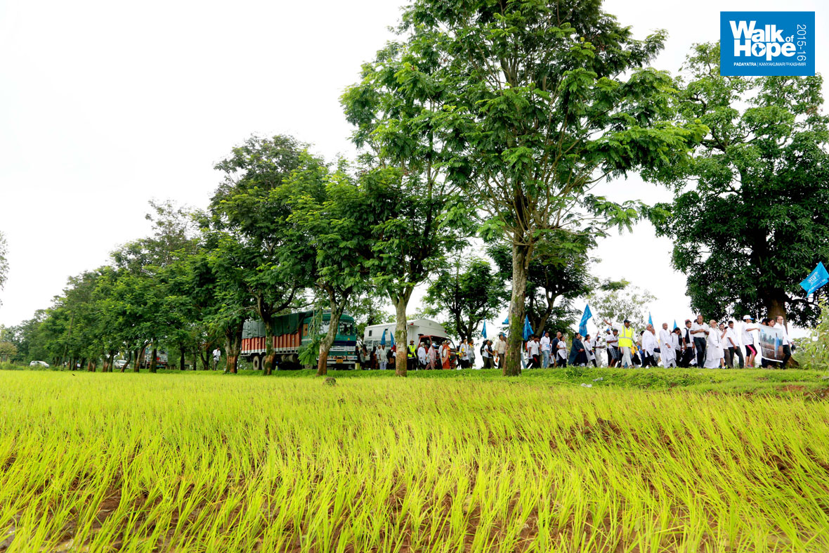 10.We-walked-against-the-backdrop-of-swaying-trees-&-bristling-paddy-fields,-Hunda,-Valsad,-Gujarat)