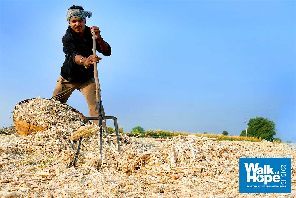 11.He-has-his-work-cut-out!,-shovelling-loads-&-loads-of-crushed-sugarcane,-Narsinghpur,-MP