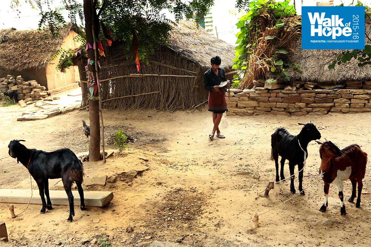 12.A-young-goat-herd-takes-time-off-to-read-our-palmphlet!!,-Kapasour,-Mirzapur,-UP