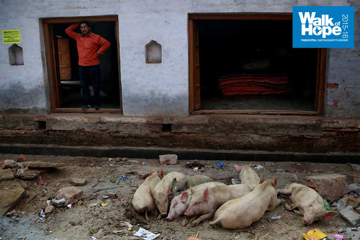 19.Piglets-on-a-roll!!,-Chetganj,-Mirzapur,-UP