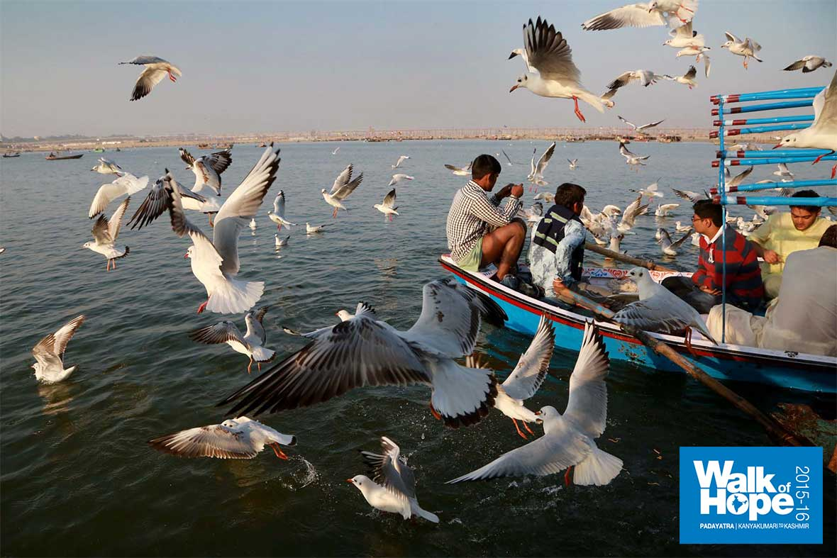3.Ahoy!,-we-have-visitors-from-afar!,-Siberian-Seagulls,-Sangam,-Allahabad,-UP