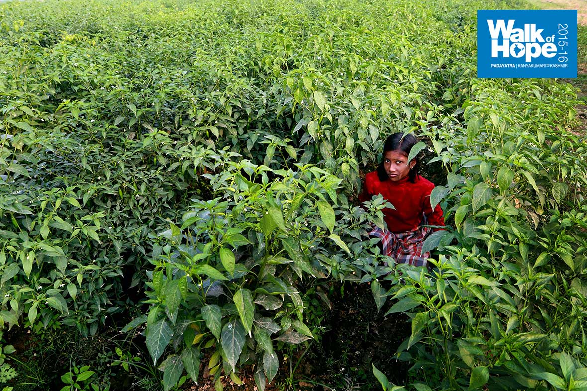 3.Dressed-like-a-chilly-pepper-in-the-fields!!,-Jayapura,-Varanasi,-UP