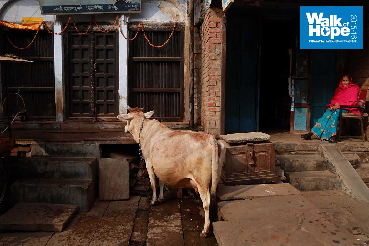 3.Where-bovines,-pigs,-dogs-&-humans-co-exist-without-much-ado!!,-the-streets-of-Mirzapur,-UP