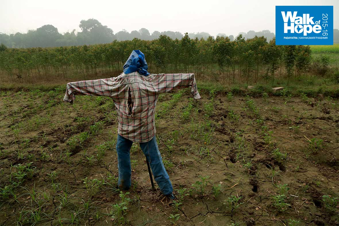 5.A-scarecrow-per-field-to-keep-the-crows-away!!,-Mohanpur,-Mirzapur,-UP