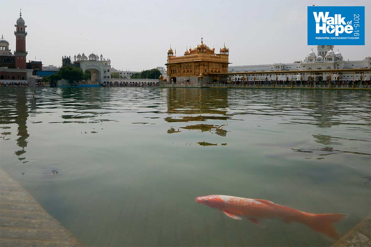 3.Where-giant-fish-swim-about-with-impunity,-Harmandir-Sahib,-Amritsar,-Punjab